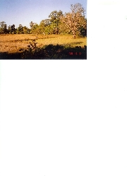 Real Estate For Sale: Rice-farm in good condition