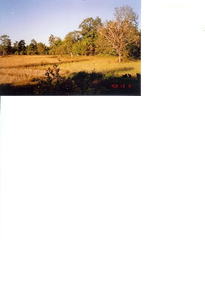 Property For Sale Or Rent: Rice-farm in good condition