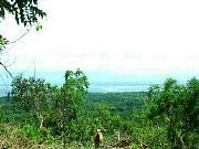 Real Estate For Sale: Bulk Ocean View Land In Bali For Sale
