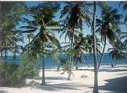 Real Estate For Sale: Ambergris Caye  Beautiful Lots