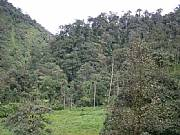 Real Estate For Sale: Riverside Property Set In Cloud Forest Reserve