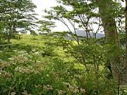 Real Estate For Sale: Hillside Paradise In The Tea Hills Of Sri Lanka - 17 Acres