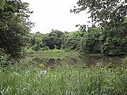 Real Estate For Sale: Beautiful Rainforest Property, Green Hills, Great Views