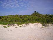Real Estate For Sale: Tulum Beachfront Lot