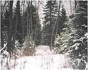 Real Estate For Sale: River Frontage In Minnesota Arrowhead Region - 4 Acres