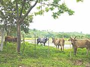 Real Estate For Sale: Operating Cattle Ranch