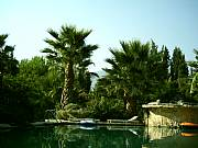 Real Estate For Sale: A Beautiful 5 Bed Rooms Villa With A Fantastic Swimming Pool