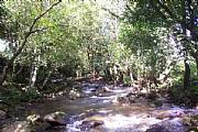 Real Estate For Sale: 6-9 Acre Farms Near Boquete; River And Road Frontage, Views