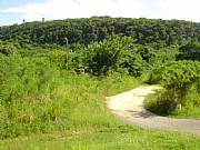 Real Estate For Sale: Gorgeous Isabela Puerto Rico Commercial Building Land Lots