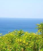Real Estate For Sale: Best Ocean View Lots Starting At $55,000