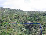 Real Estate For Sale: Beautiful Coffee Plantation