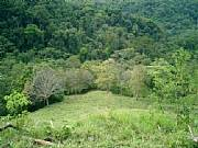 Real Estate For Sale: Incredible Farm! River Side, Huge Native Trees, Pasture, ...
