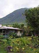 Rental Properties, Lease and Holiday Rentals: Mayorine Cottage - Artist's Hideaway - Nevis, West Indies