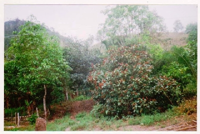 Property For Sale Or Rent: WORKING FARM IN ESMERALDAS, ECUADOR 276 ACRES