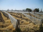 Real Estate For Sale: exelent invest wineyard farm